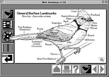 A HyperCard bird