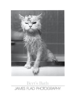'Bert's Bath' led to lawsuits.