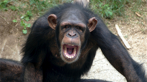 The Killing Fields Chimpanzees Wage War For New Territory