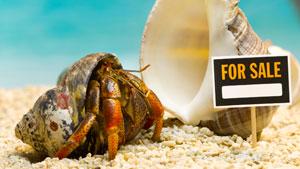 hermit crab essays on leadership