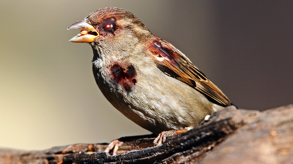 Weird Science programs its zombie robot sparrows to KILL