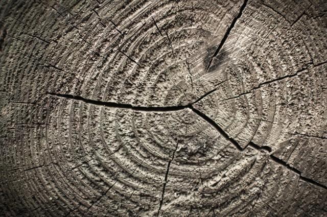 Tree Ring Radiation