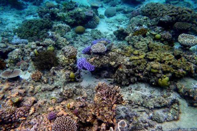 the effects of ocean acidification on coral reefs Ocean acidification affects coral growth  the effects of ocean acidification on coral reefs at  effects of ocean acidification on coral reef systems.