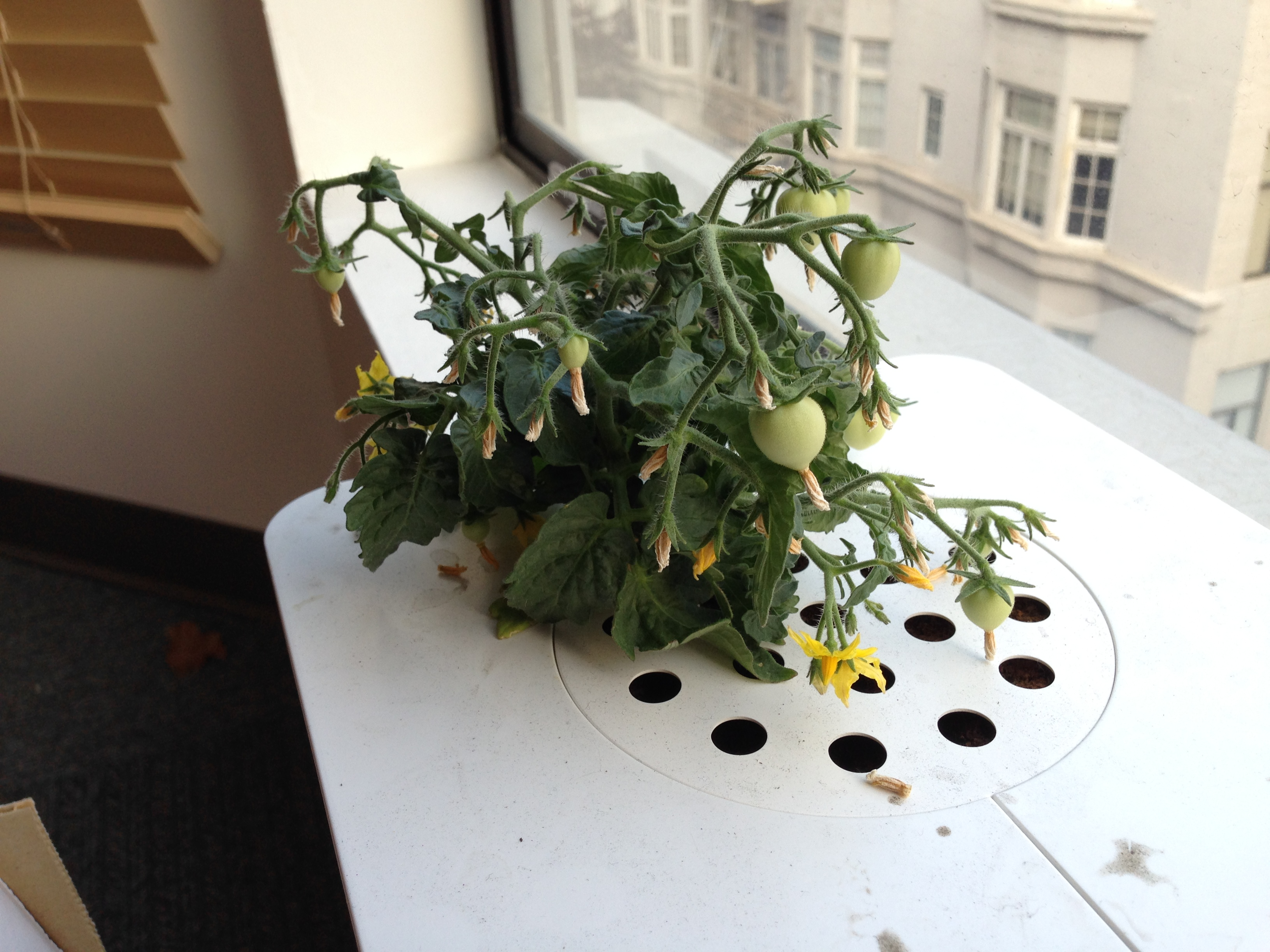 This is Nate Cardozo's Click and Grow Flower Smartpot as of November 11, 2013.
