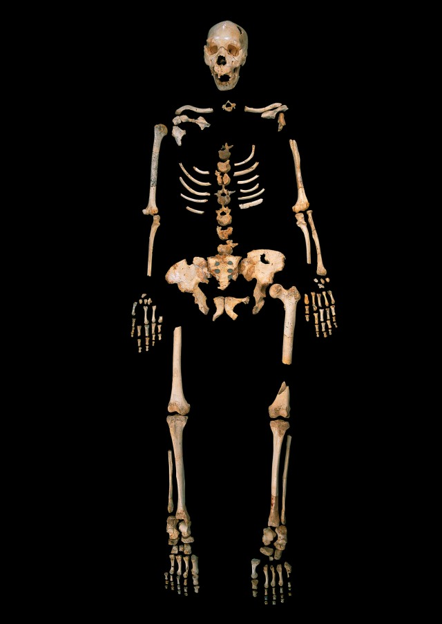 A Homo heidelbergensis skeleton from the cave in question.