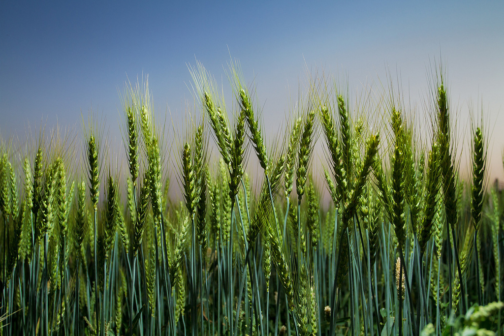 New project compares models of climate's impact on crops, water, more