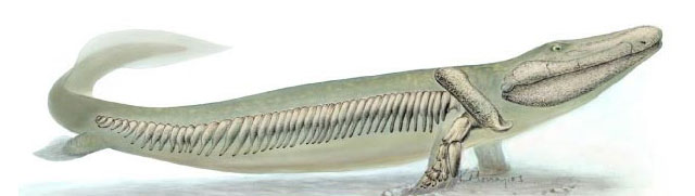 An artist's conception of Tiktaalik roseae.