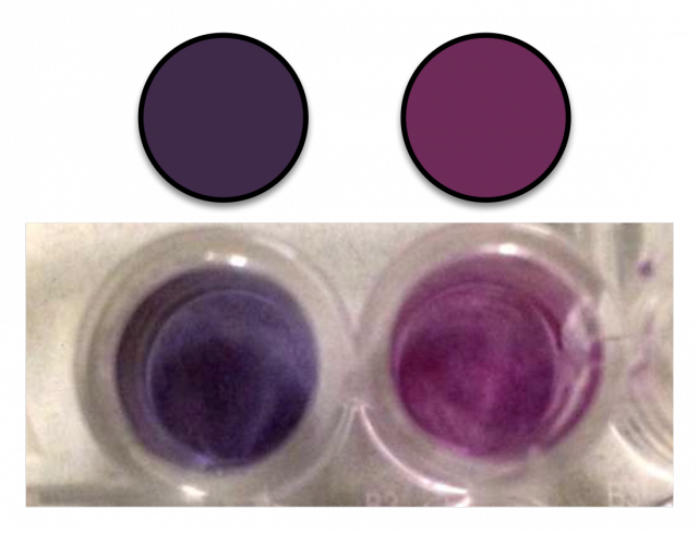 Two gold nanoparticle solutions. On the left, the gold nanoparticles were grown in a solution of 119.95 microMolar of hydrogen peroxide. On the right, the concentration was 120.00 microMolar. The average color of the solutions is shown in the top row.