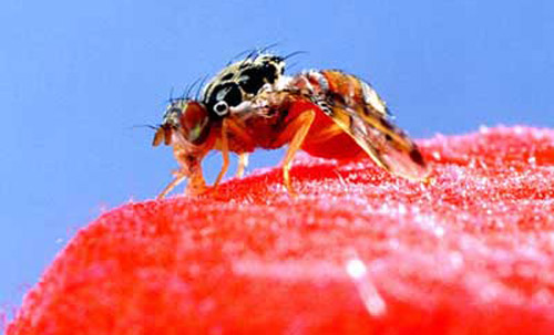 You Can Bring A Fly To Water But Is It Rewarding For It To