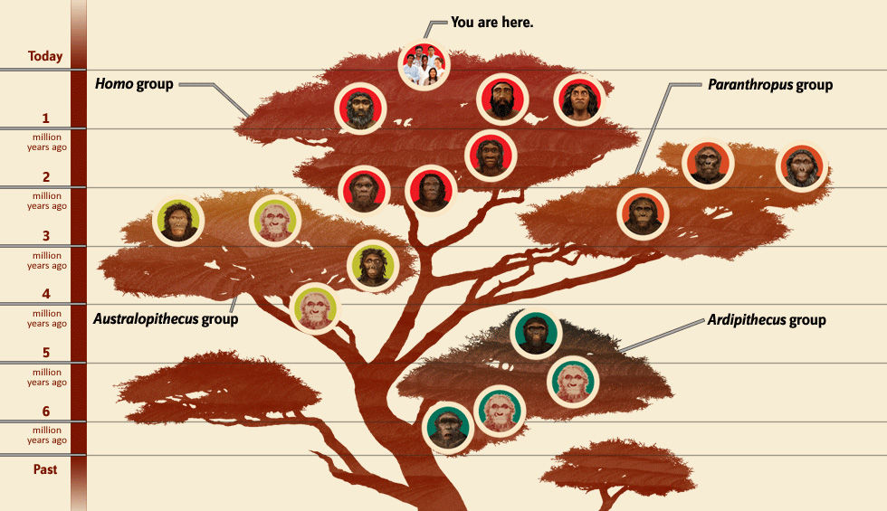 Humans aren't so special after all: The fuzzy evolutionary ... Neanderthal 1