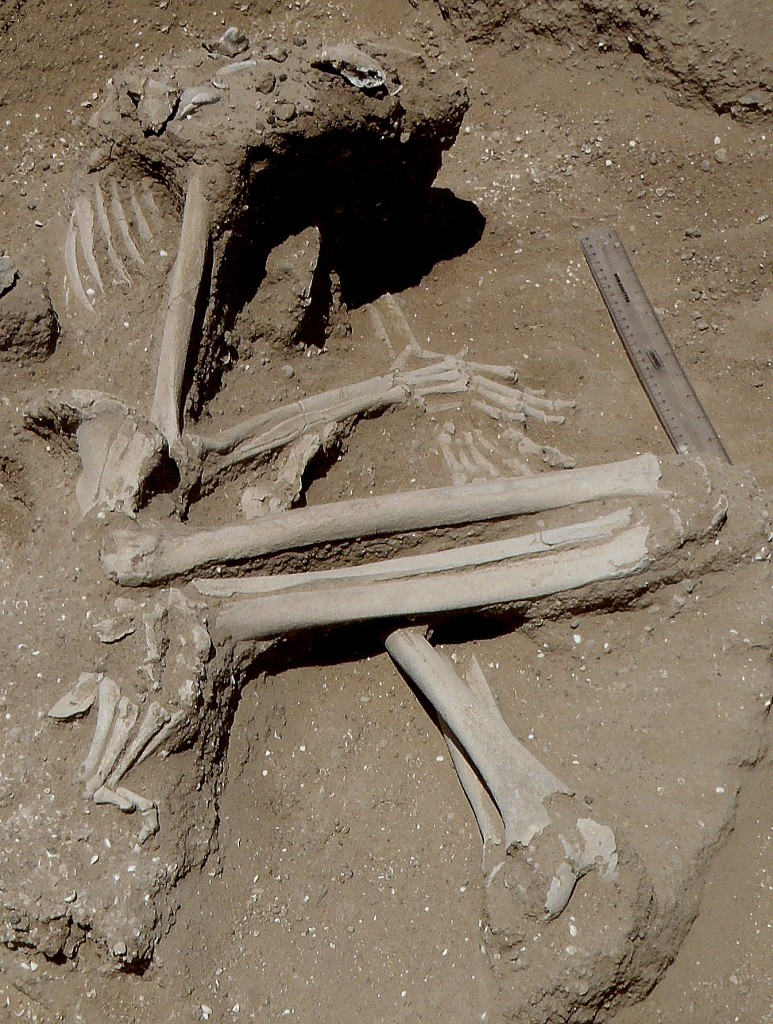 The body of a woman whose hands were likely bound, based on their position. Her knees and left foot were fractured, possibly broken while she was captive. She was found surrounded by the remains of fish.