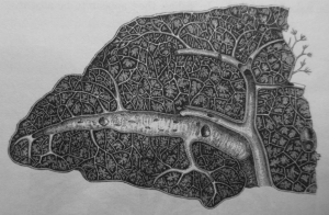 A spleen image by Carter which was assumed to have been created by Henry Gray.
