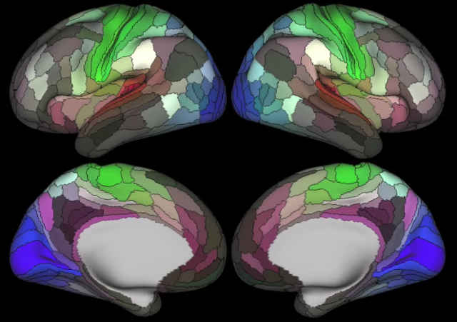 Researchers map another 180 areas of the human brain
