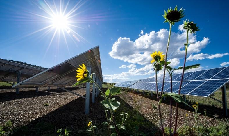 solar-with-flower-800x400.jpg