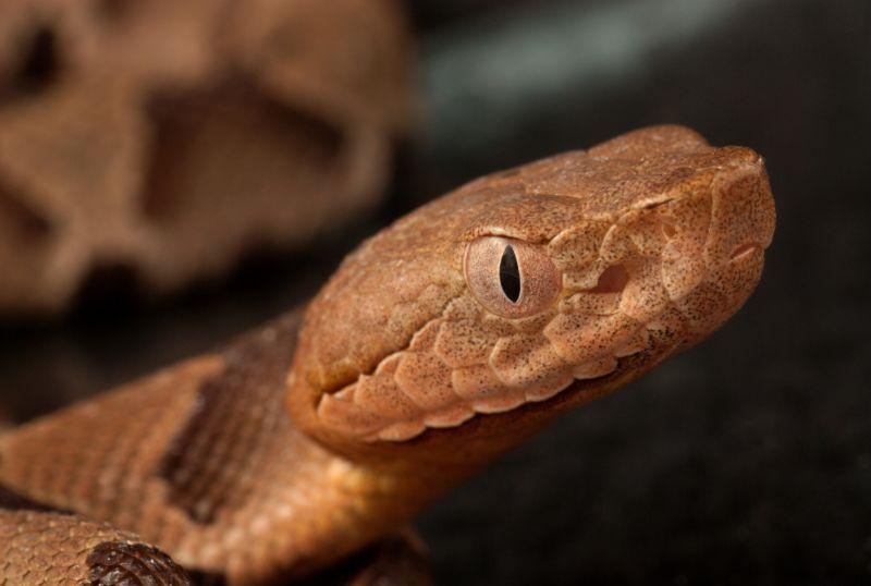 Girl's $143,000 bill for snakebite treatment reveals antivenin price gouging | Ars Technica