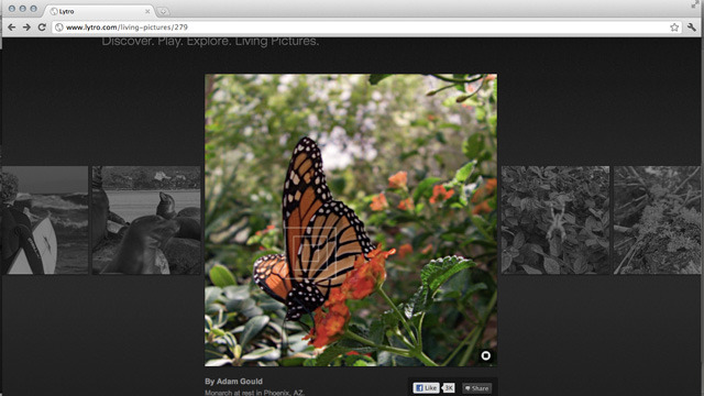 "Using Lytro's web-based ""living image"" viewer, simply click on any point in the image to instantly change the focus point."