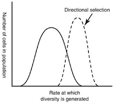 Schematic illustration of increasing mutation rates (x-axis) resulting from antimicrobial selection pressure.