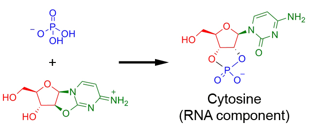 A three-ringed compound neatly opens up to an RNA base/sugar combination.