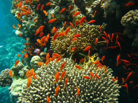 Coral reef off Port Ghalib, Egypt