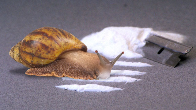 Weird Science drugs its snails, keeps its zebras on the
