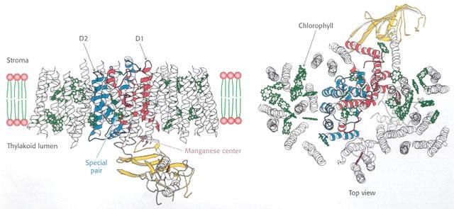 Bacterial light-harvesting proteins make a regenerating solar cell