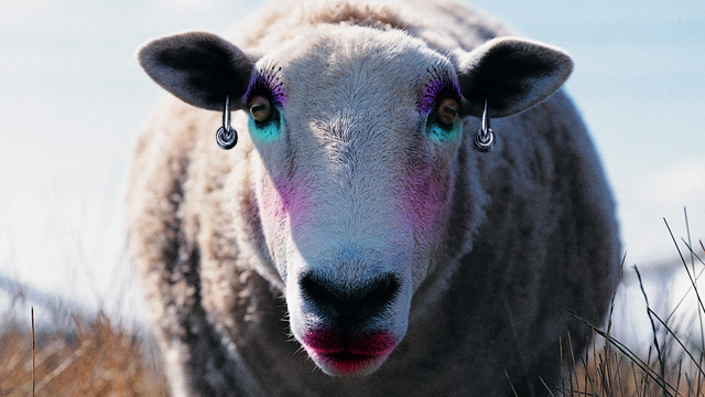 Sex with sheep maricopa arizona