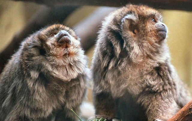 Virus kills monkeys, hops species to humans