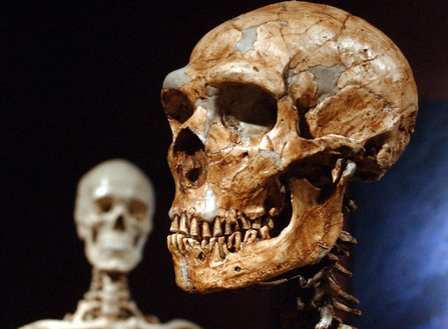 Neanderthals were outnumbered by the first modern humans