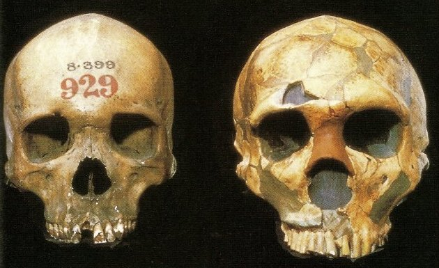 Sleeping around gave early humans immune boost from Neanderthals, Denisovans