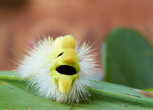 Week in science: zombie caterpillar edition