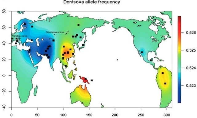 Global map of Denisovan gene frequency in modern human genomes.