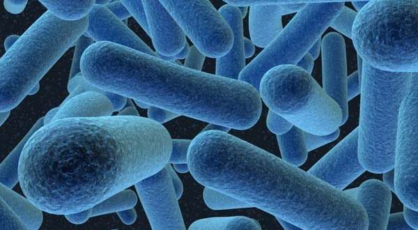 Watching bacteria evolve into problems