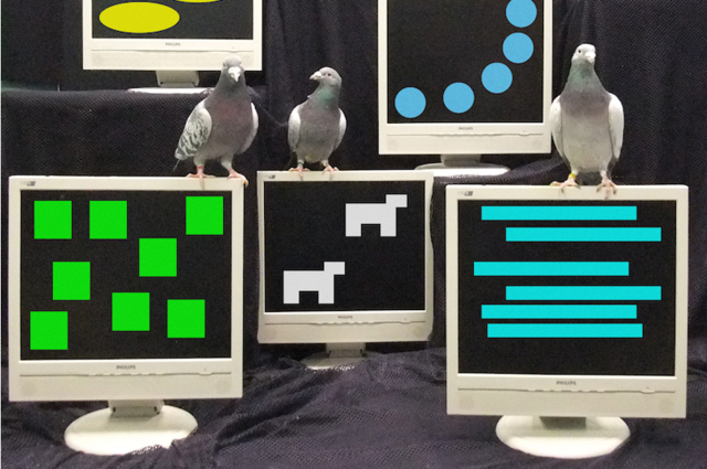 Pigeons match primates in number sense