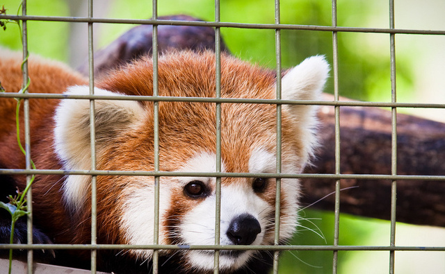 A proposal to put HTML video behind bars is making FIrefox sad