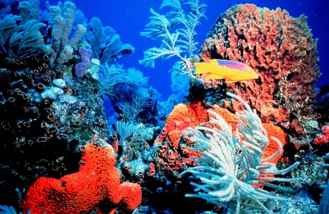For cold water corals, warming is beating acidification to drive a growth spurt