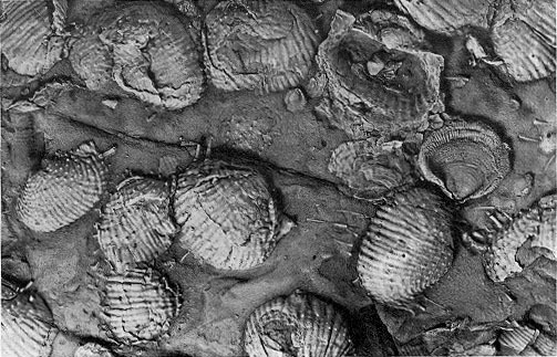 The rock record got a bad rap. Fossil diversity accurately reflects history