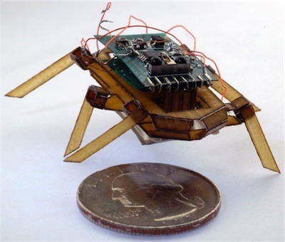 Revenge is ours: extracting energy from a cockroach