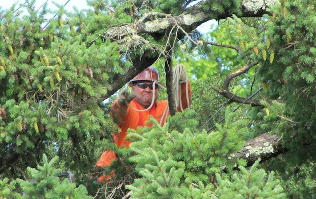 Sonic stringing fiber through the treetops