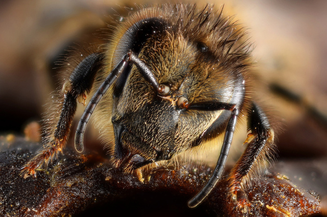 Honeybees may have personality