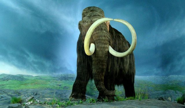 Cloning and resurrecting the mammoth? Not so fast