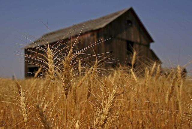 Activists in UK plan to trash crop experiment