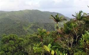 """The view from Coquitel's """"backhaul"""" tower in Orocovis, Puerto Rico."""