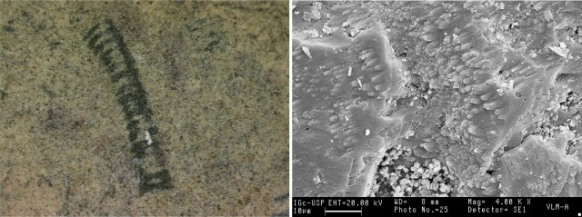 Corumbella fossil (left) and microphotograph of structure (right).
