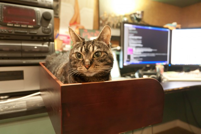 Optimized cat storage is an essential part of the modern working environment.