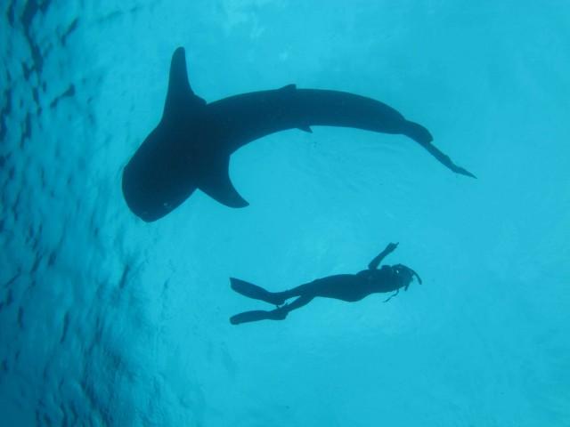 Recreational diving, an often overlooked ocean resource.