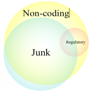 Regulatory, junk, and non-coding DNA are all partly overlapping categories, which helps foster confusion. (Circles not to scale.)