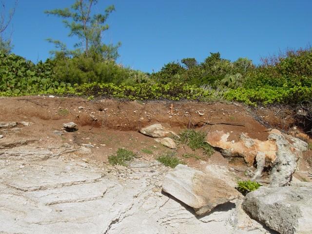Bermuda's red soils sit atop limestone bedrock.