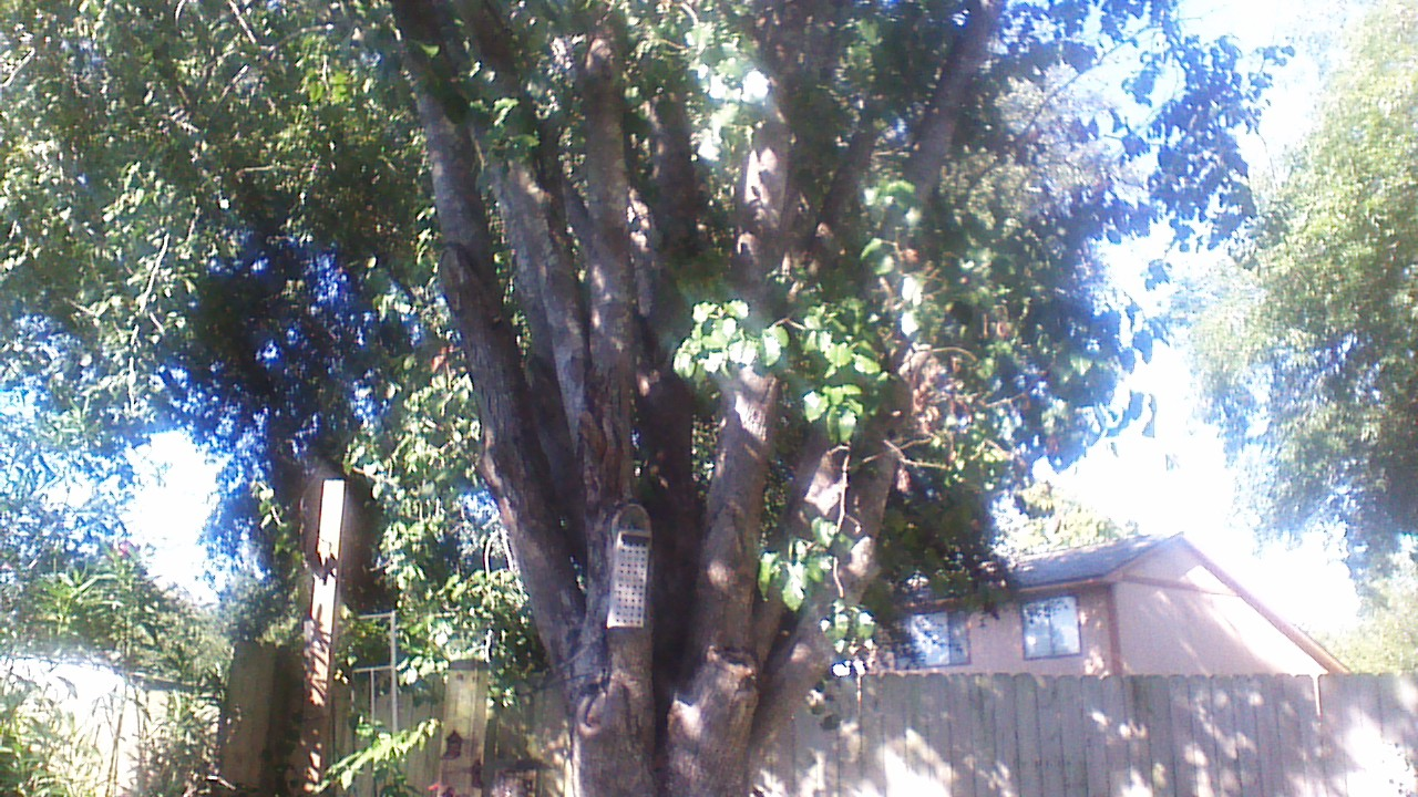 The rear camera outdoors. The lighting was unforgiving; such is the nature of sunny days. You can see that it's a tree, but this isn't exactly worth keeping.