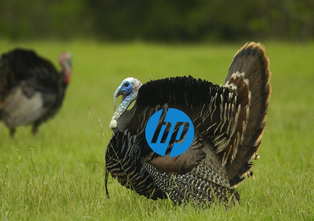 Hewlett-Packard's financial results for 2012 are not exactly a cause for thanksgiving.
