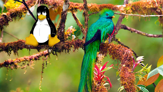 Tux shares a perch with Ubuntu 12.10's namesake bird